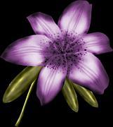 háttér nélküli png kép, lila virág